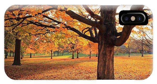 Francis Park Autumn Maple IPhone Case