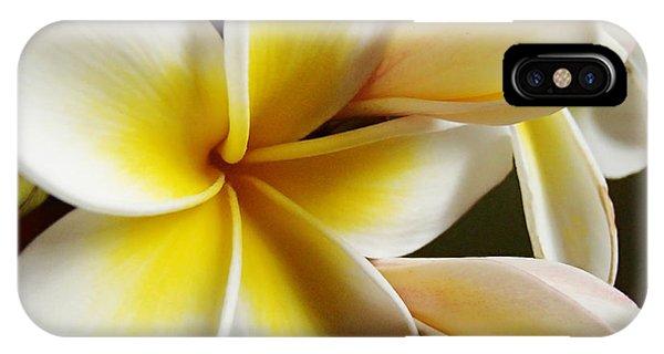 Frangipani 1 IPhone Case
