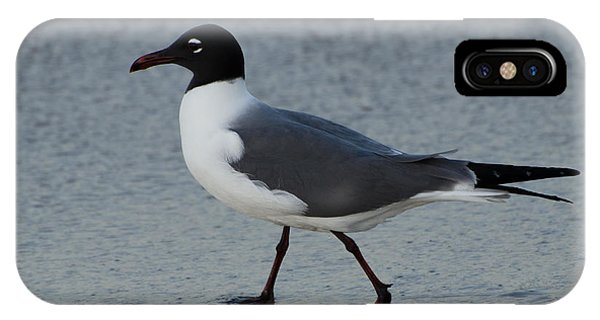 Brian Rock iPhone Case - Franklins Gull by Brian Rock