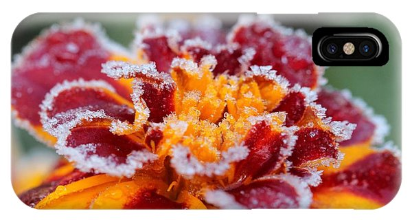 iPhone Case - French Marigold Named Durango Red Outlined With Frost by J McCombie