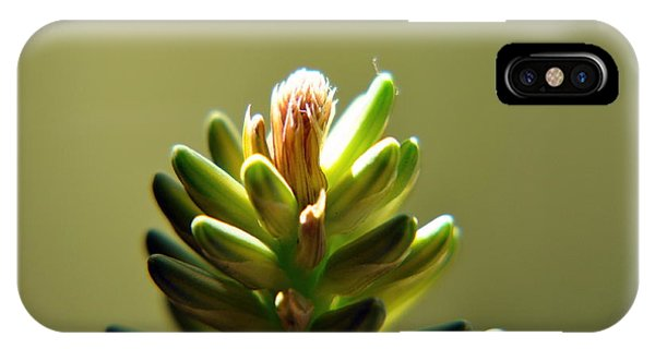 Fresh Blossom IPhone Case