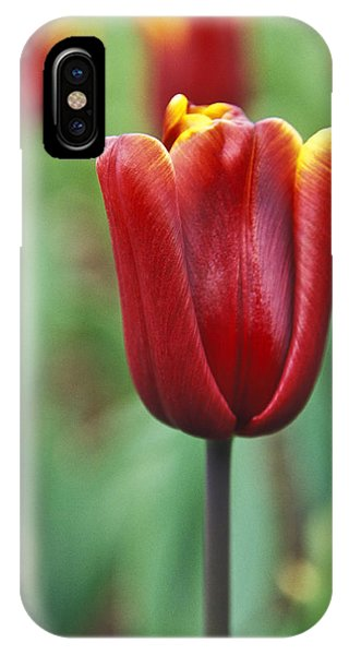 Freshness  IPhone Case