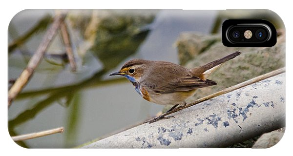 Friendly Bluethroat 03 IPhone Case