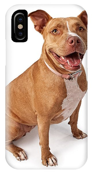 Pitbull iPhone Case - Friendly Pit Bull by Susan Schmitz
