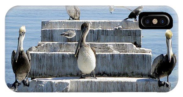 Pelican Friends IPhone Case
