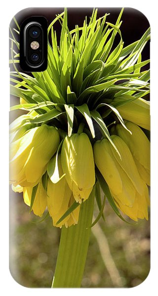 Cultivar iPhone Case - Fritillaria Imperialis 'lutea' Flowers by Adrian Thomas
