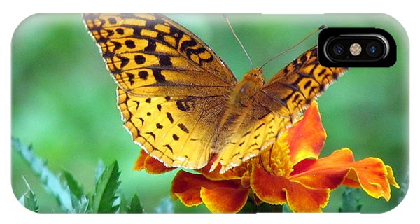 Fritillary On Marigold Iv IPhone Case