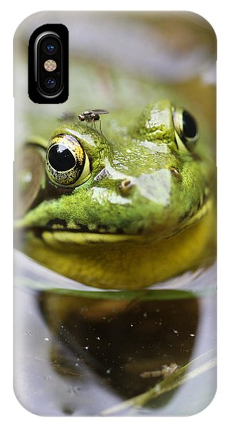 Frog And Fly IPhone Case