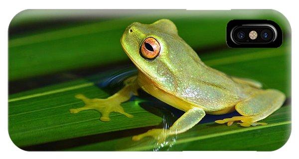 Frog Eye Reflection IPhone Case