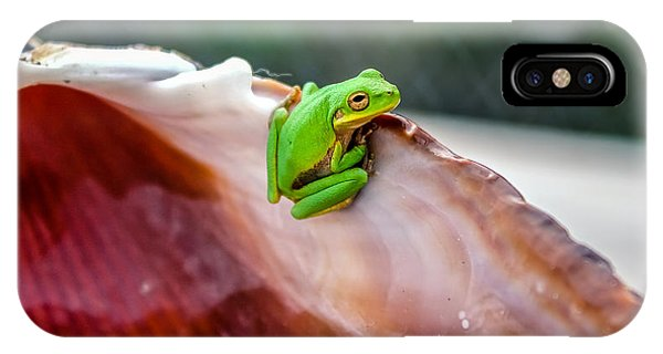 Frog In A Cockle IPhone Case