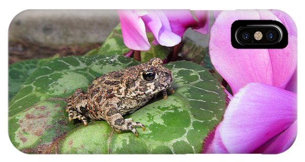 Frog On Cyclamen Plant IPhone Case