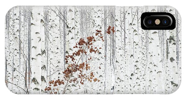 Birch Tree iPhone Case - From White by Donghee, Han