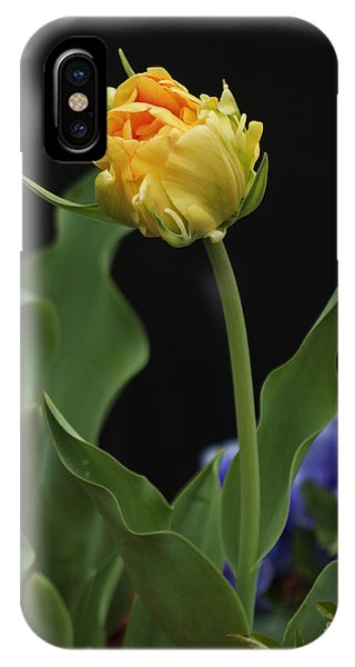 Front Yard Tulip IPhone Case