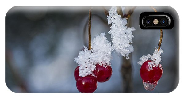 Frost Berries IPhone Case