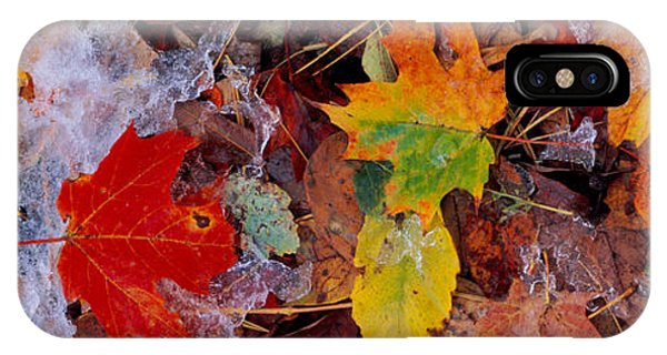 Frost On Leaves, Vermont, Usa IPhone Case