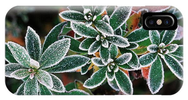 Cold Day iPhone Case - Frosted Leaves, Close-up (large Format by Stuart Westmorland