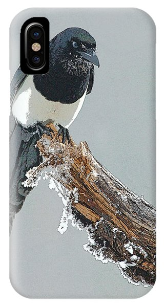 Frosted Magpie- Abstract IPhone Case