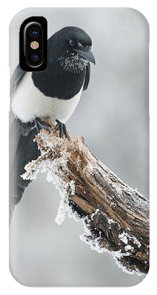 Frosted Magpie IPhone Case