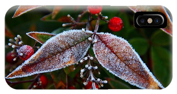 Frosted Nandina Leaves IPhone Case