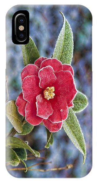 Frosty Camellia - Phone Case Design IPhone Case