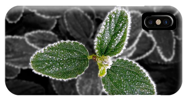Frosty Leaves IPhone Case