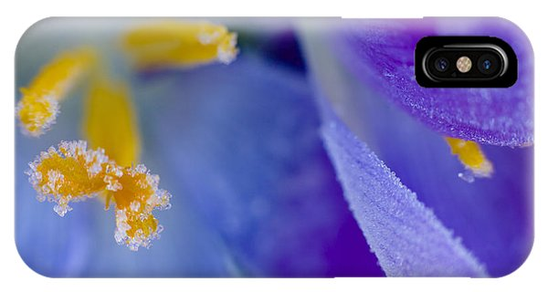 Frozen Crocus IPhone Case