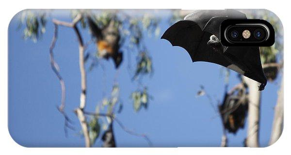 Fruit Bat IPhone Case