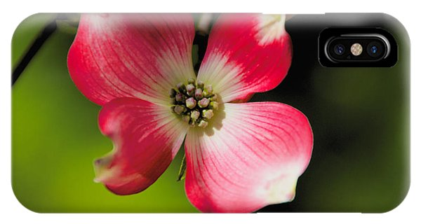Fruit Tree Flower IPhone Case