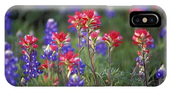 Scarlet Paintbrush iPhone Case - Texas Wildflowers - Fs000926 by Daniel Dempster