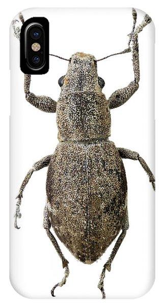 Fuller Rose Beetle IPhone Case