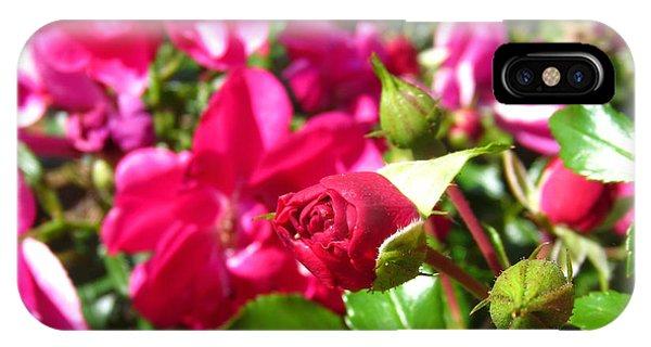 Fuschia Roses IPhone Case