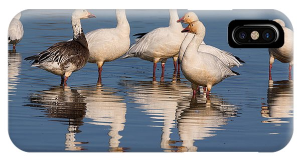 Gaggle Of Snow Geese Reflected IPhone Case