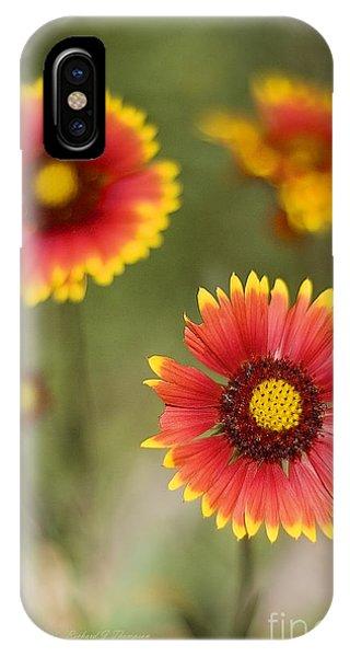 Gaillardia 'arizona Sun' IPhone Case