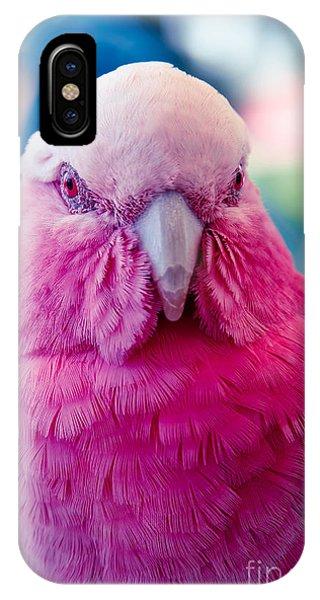 Galah - Eolophus Roseicapilla - Pink And Grey - Roseate Cockatoo Maui Hawaii IPhone Case