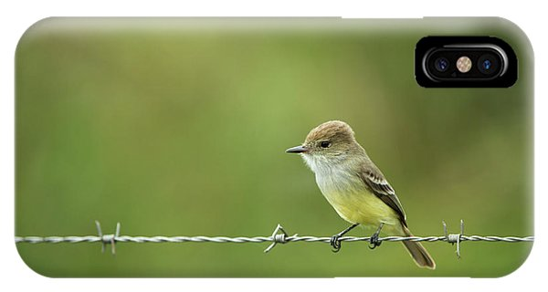 Galapagos Flycatcher (myiarchus IPhone Case