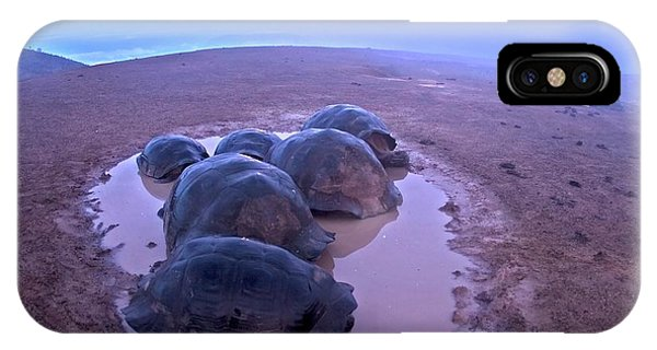 Adapted iPhone Case - Galapagos Giant Tortoises On Volcano Rim by Paul D Stewart