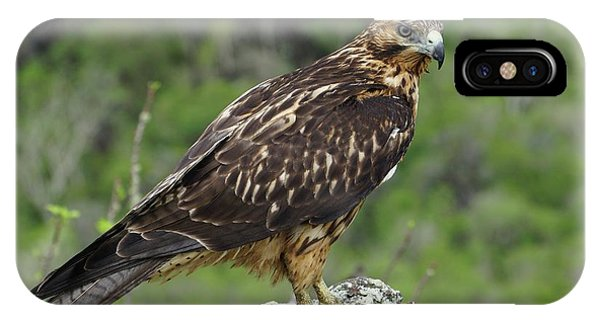 Galapagos Hawk Buteo Galapagoensis Phone Case by Photostock-israel/science Photo Library