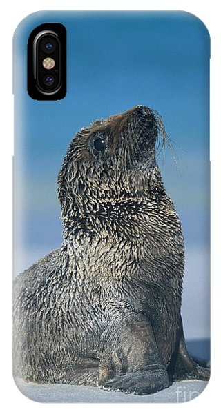 Galapagos Sea Lion IPhone Case