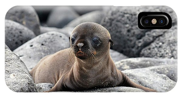 Galapagos Sea Lion Pup IPhone Case
