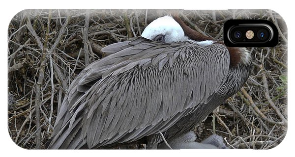 Galapagos - Watchful Pelican IPhone Case