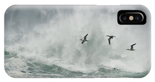Gannets Past A Raging Sea. IPhone Case
