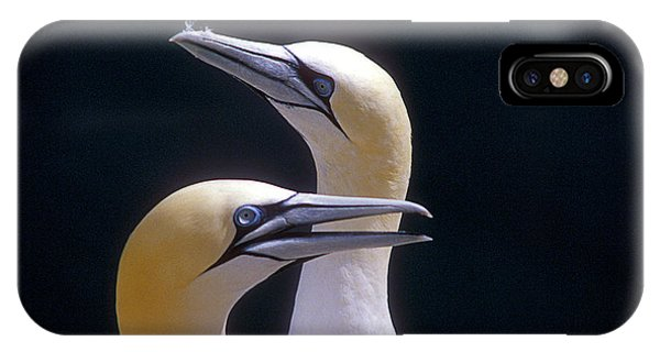 Northern Scotland iPhone Case - Gannets by Simon Fraser/science Photo Library