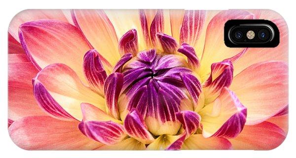 Garden Dahlia IPhone Case