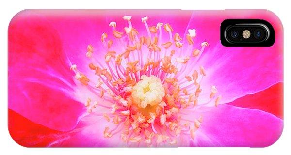 Stamen iPhone Case - Garden Rose Flower (rosa Sp.) by Maria Mosolova/science Photo Library