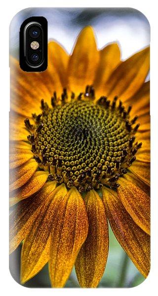 Garden Sunflower IPhone Case
