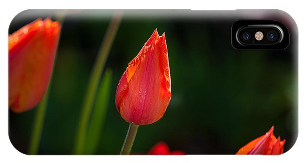 Garden Tulips IPhone Case