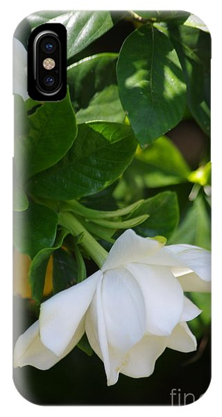 Gardenia IPhone Case