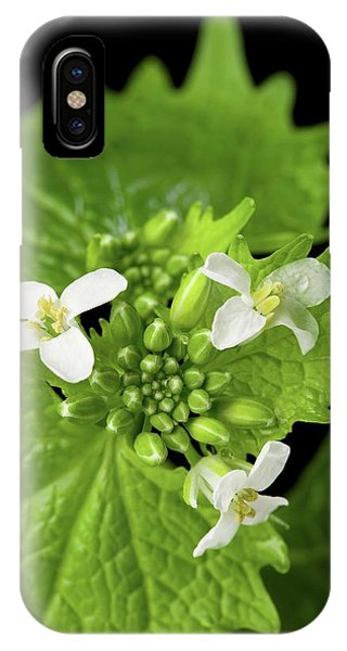 Mustard iPhone Case - Garlic Mustard Flowers by Peggy Greb/us Department Of Agriculture