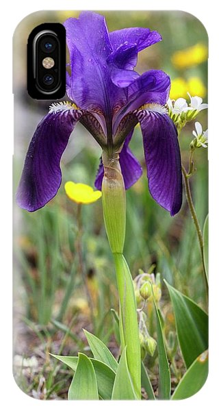 Monocotyledon iPhone Case - Garrigue Iris (iris Lutescens Lutescens) In Flower by Bob Gibbons/science Photo Library