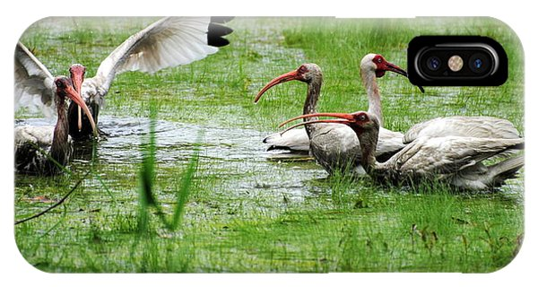 Gathering Of Ibis IPhone Case